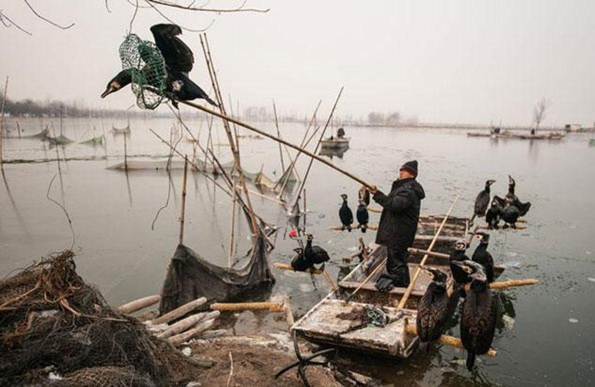 Fischen mit Hilfe der Kormorane