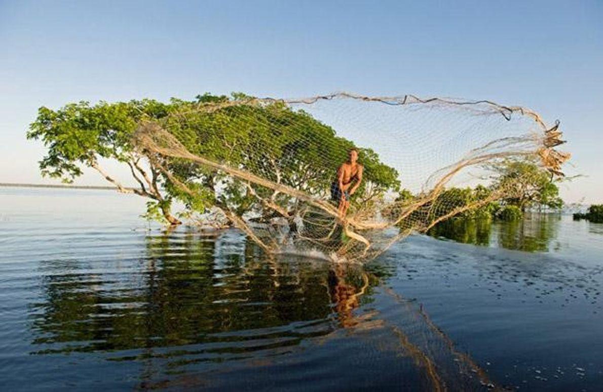 Galerie: Amazonasdelfine: Die Flussgeister des Amazonas
