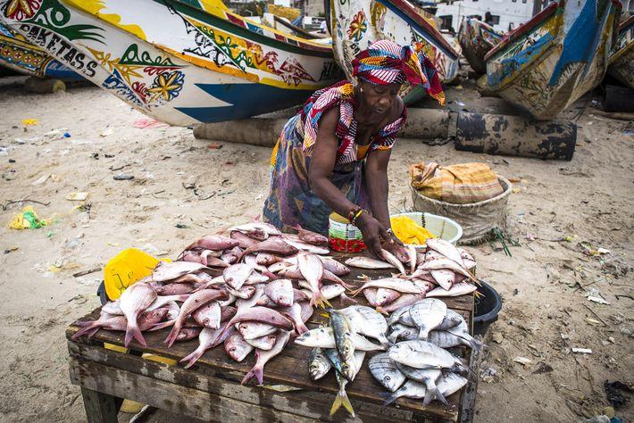 Foto eines Fischmarktes in Dakar, Senegal