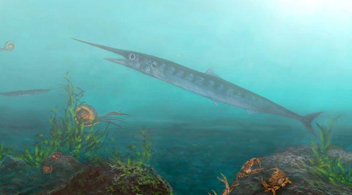 Eine künstlerische Darstellung des Fischs in seiner Umgebung, zusammen mit anderen Tieren wie Ammoniten und Krebstieren, ...