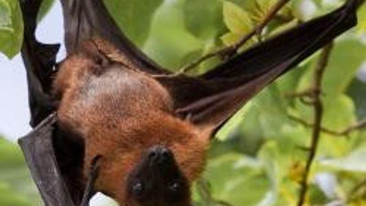 Wildlife: Batwoman