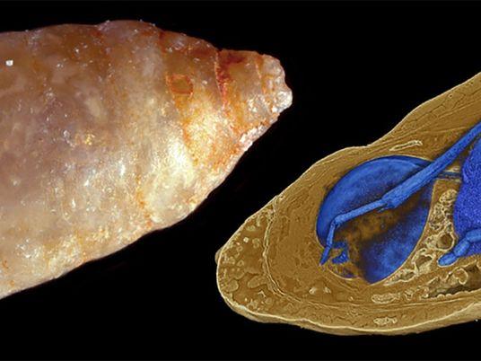 Prähistorische Parasiten: Der seltene Fall von Fossilien in Fossilien
