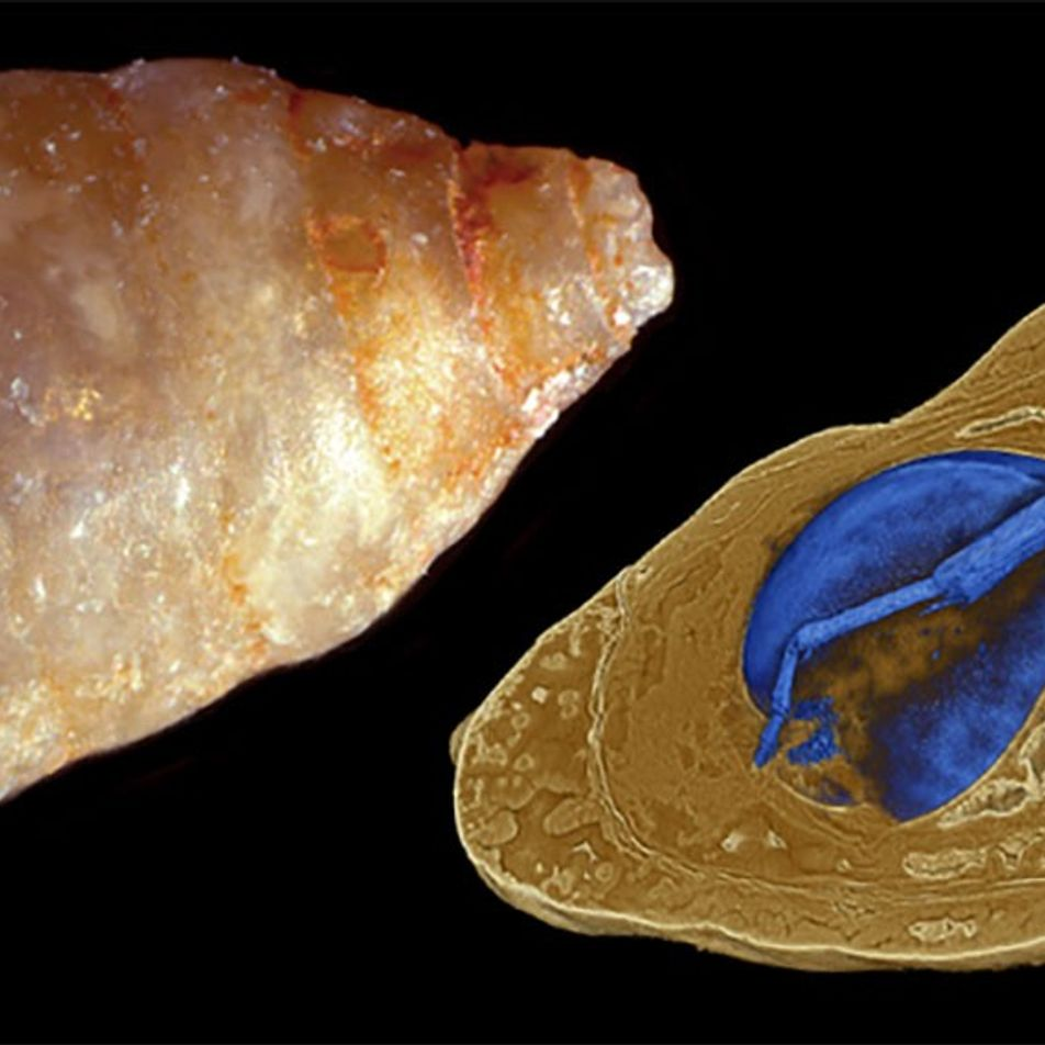 Galerie: Prähistorische Parasiten: Der seltene Fall von Fossilien in Fossilien