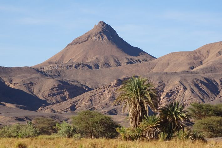 Landschaft bei Zoui mit Dattelpalmen und Akazien – im Hintergrund der Vulkanit Tougoundjou.
