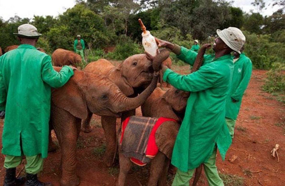 Fütterung von Elefantenwaisen