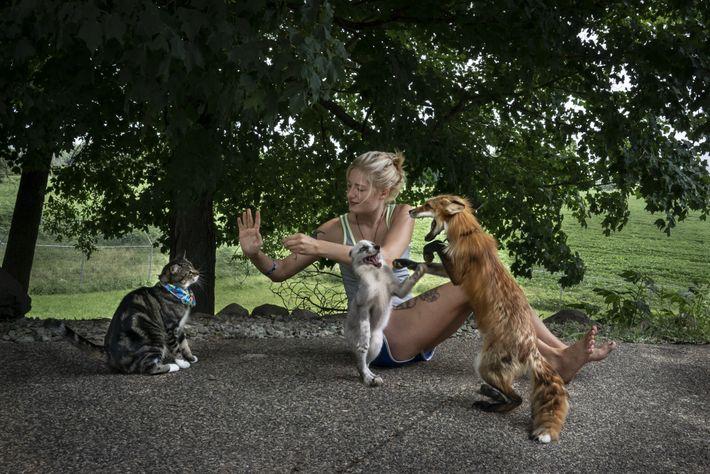 """Raines hat den Tieren von Save a Fox den Trick """"Gib mir Fünf"""" beigebracht, sogar der ..."""