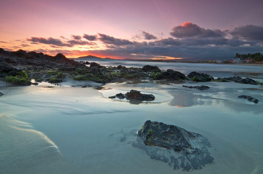 Die Galapagosinseln sind eine Gruppe von Vulkaninseln, auf denen etliche Tiere leben, die es nirgendwo sonst auf der Welt gibt, darunter auch Meerechsen, Riesenschildkröten und die Galapagosscharbe.