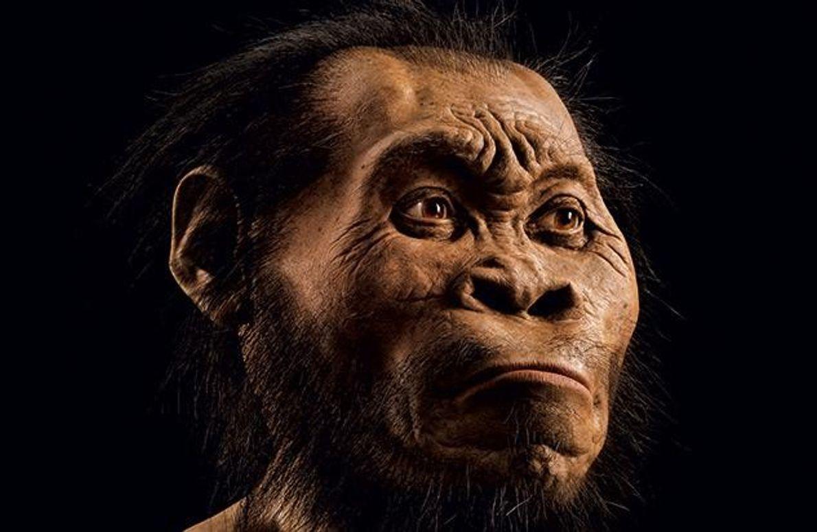 Gattung Homo?