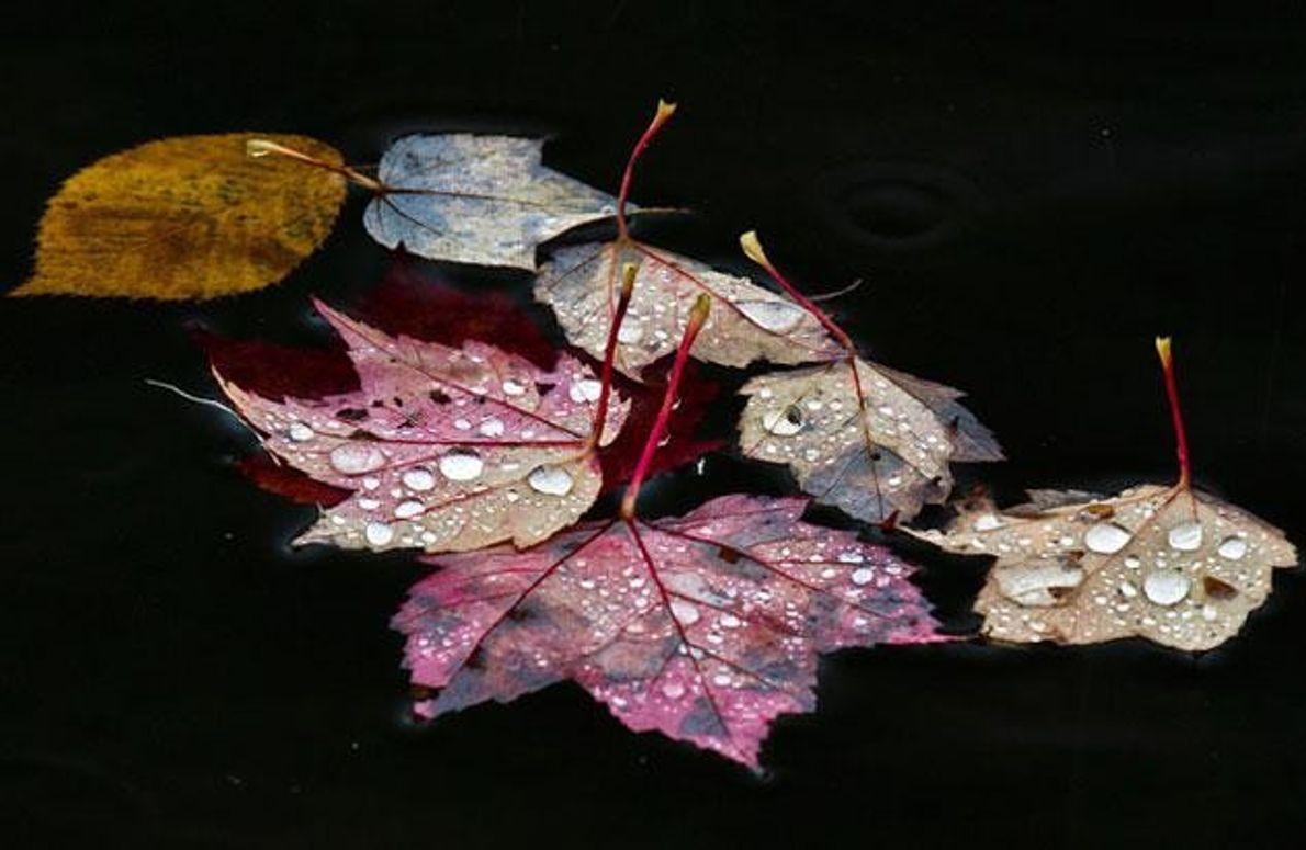 Gefärbte Blätter im Wasser