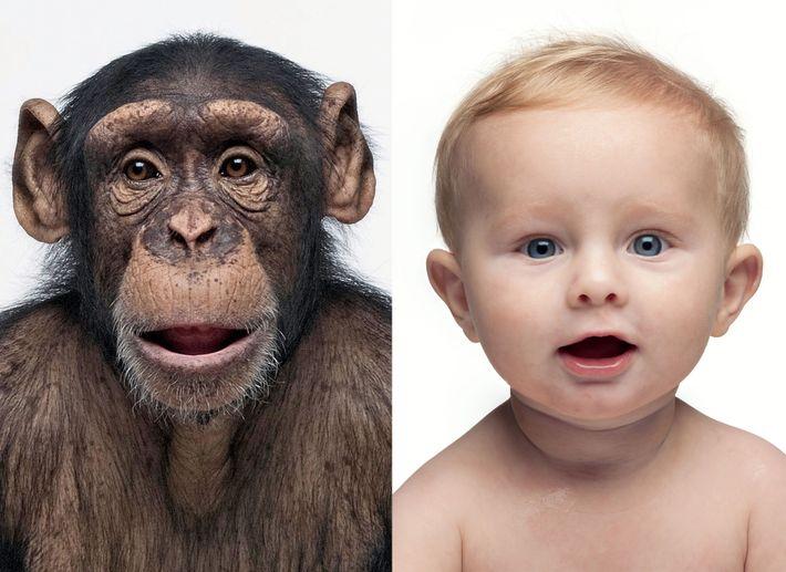 Die DNA-Profile dieser beiden sind zu fast 99 Prozent identisch. Die Gene von zwei beliebigen Menschen ...