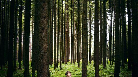 Deutscher Jugendlicher ist dabei, eine Billion Bäume zu pflanzen