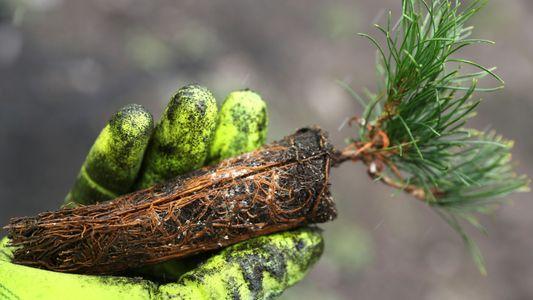 Bäumepflanzen für das Klima: Warum das komplex und teuer ist