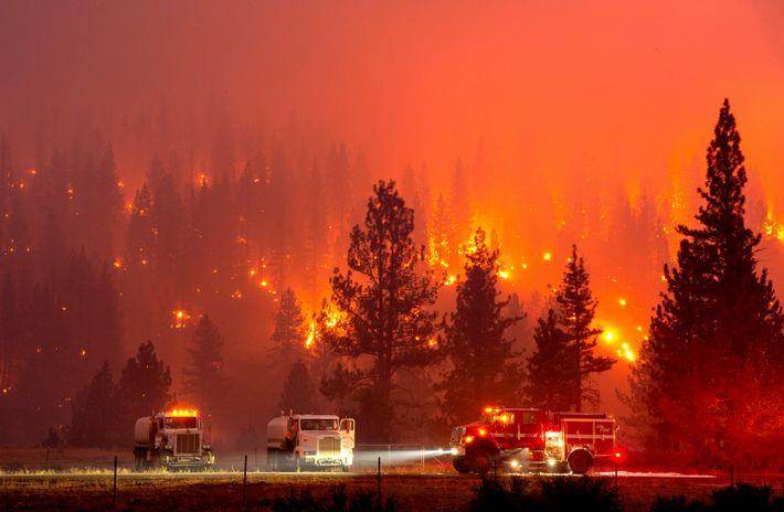 Die Feuerwehr kämpft am 20. Juli 2020 mit den Flammen des Hog-Feuers, das sich auf einer ...