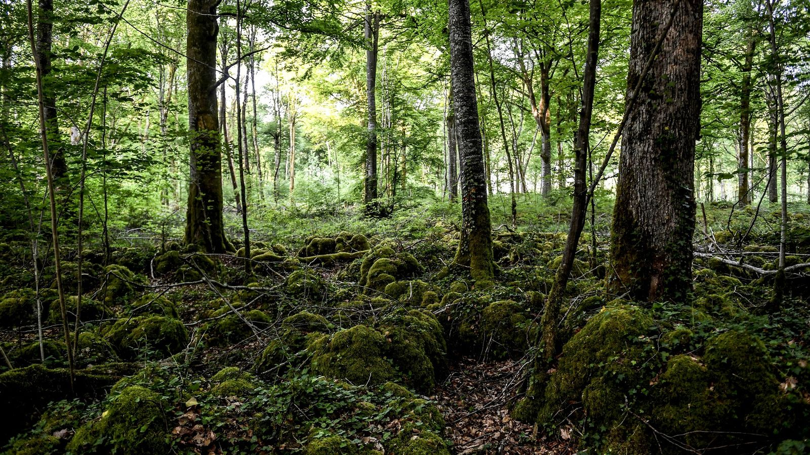 Frankreichs 11. Nationalpark