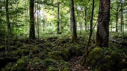 Frankreichs neuster Nationalpark: Für Natur, Mensch und Wirtschaft