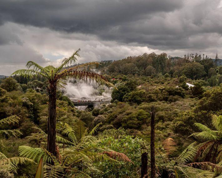In Te Puia, zugleich Park und Māori-Kulturzentrum in Rotorua, bricht ein Geysir aus.