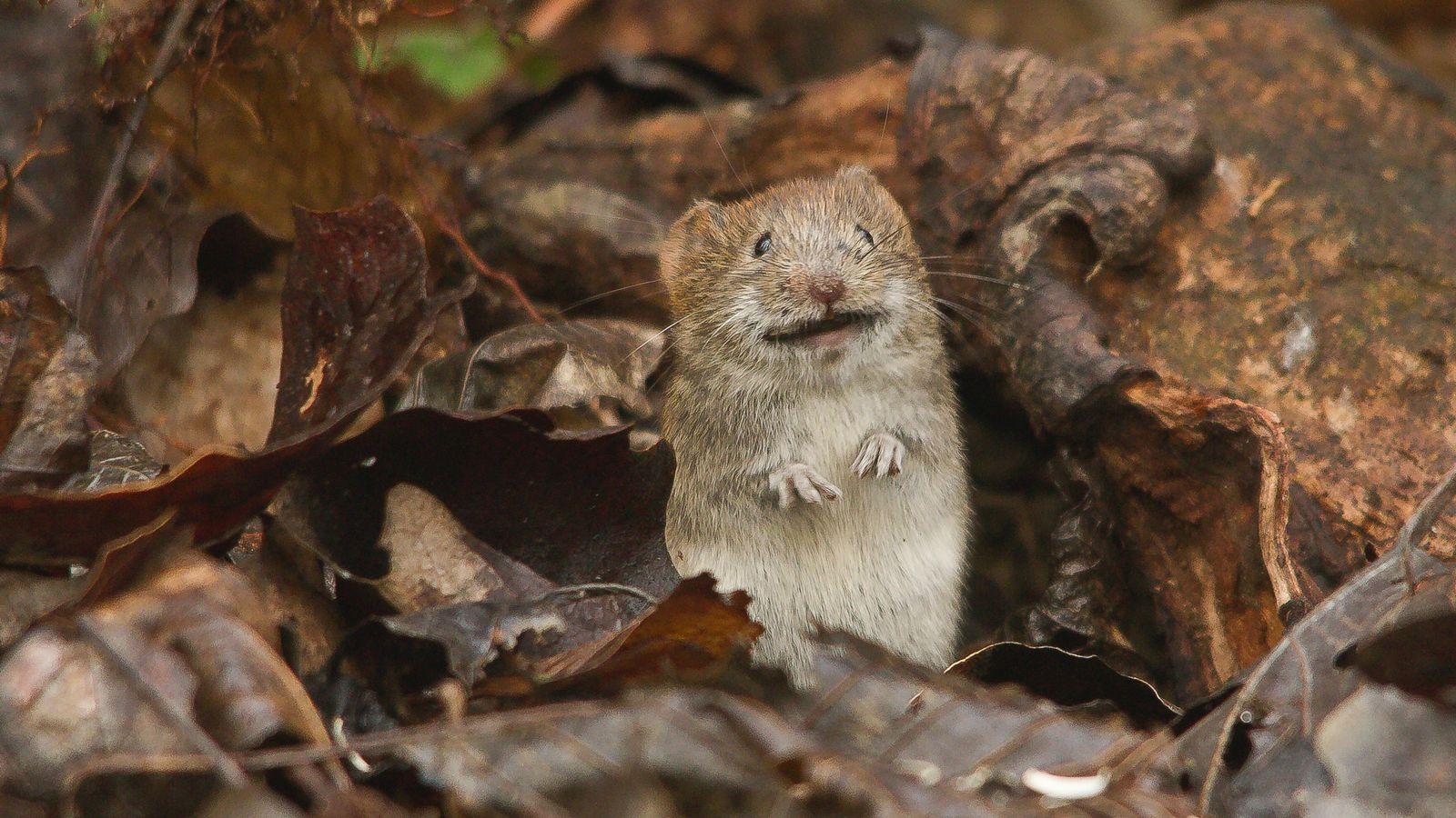 Können Tiere lachen Forschung