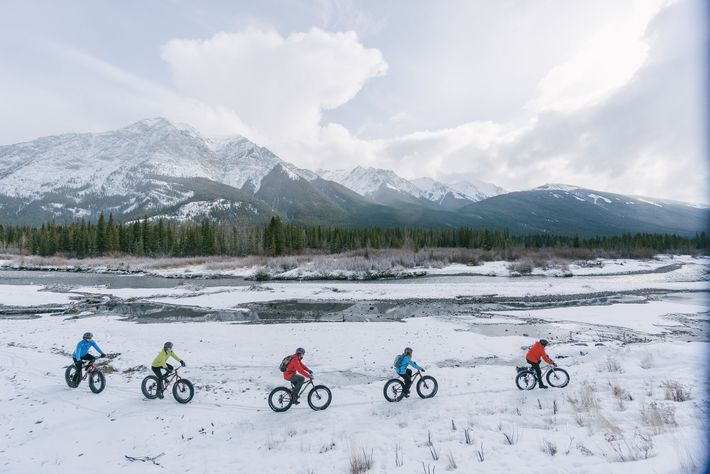 In vielen von Albertas Parks sind Fat-Bikes das ideale Fortbewegungsmittel für winterliche Ausflüge.