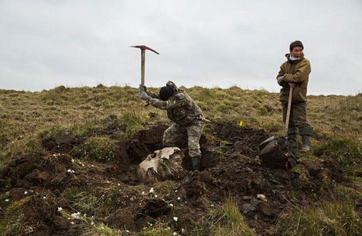 Grabungen in der Tundra