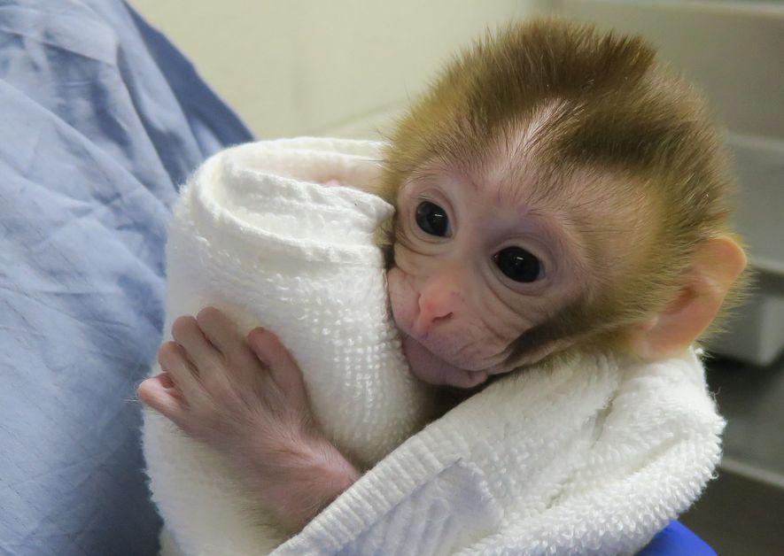 Die zwei Wochen alte Grady kuschelt sich an ihr Handtuch.