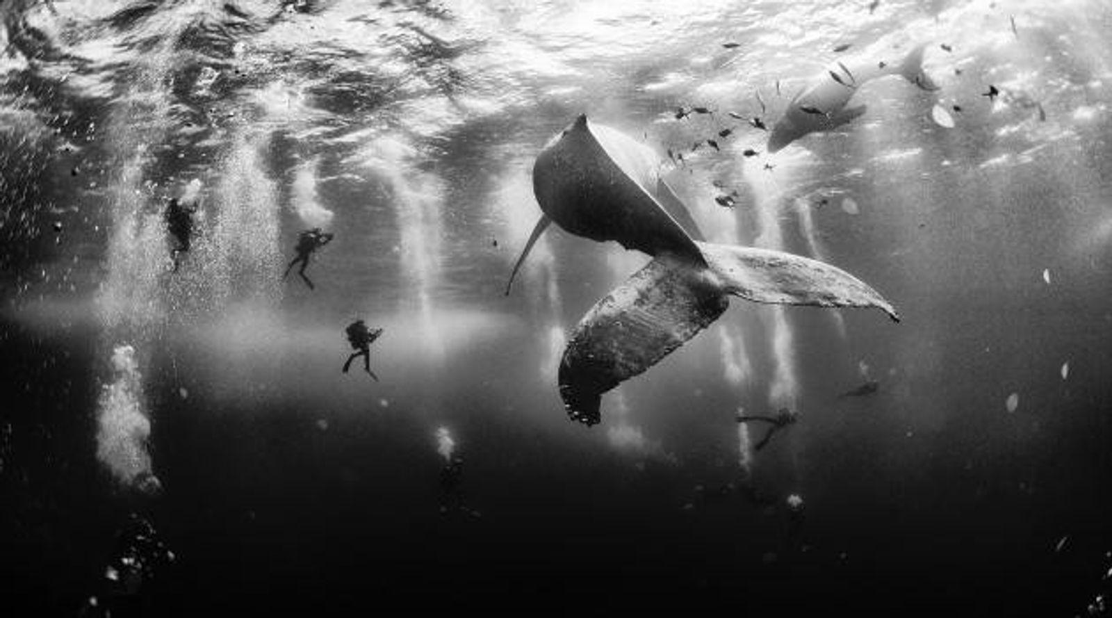In den Gewässern vor der mexikanischen Insel Roca Partida gelang Anuar Patjane Floriuk diese fantastische Aufnahme. ...