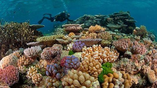 Great Barrier Reef: Ein brüchiges Reich