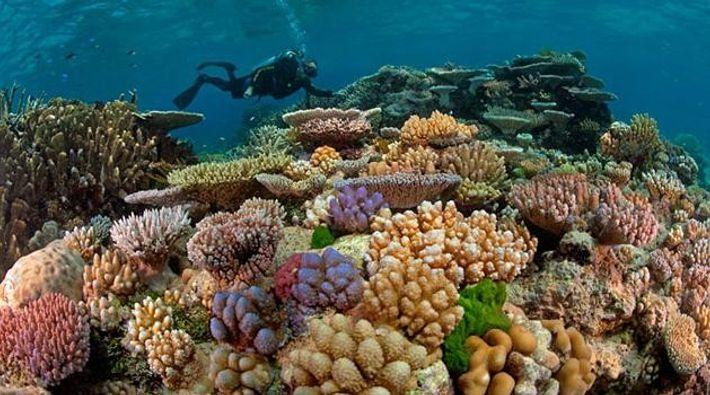 Das Great Barrier Reef in seiner ganzen Pracht.
