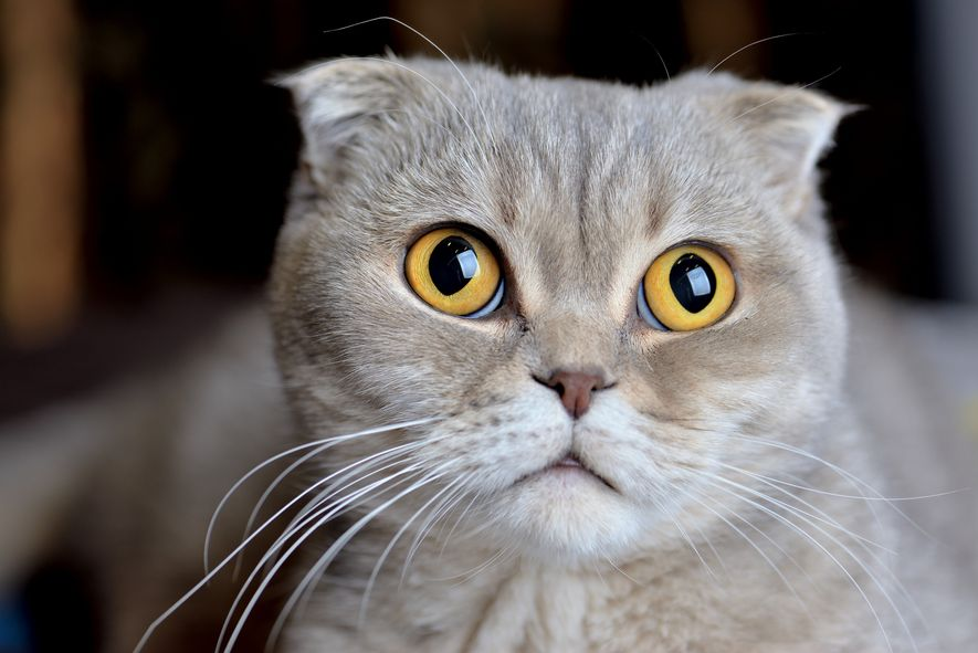 Haustiere wie Hunde und Katzen können Tierhaarallergien auslösen. Diese Allergene sitzen jedoch nicht im Fell, sondern ...