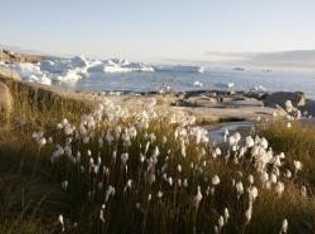 Sehr beliebt: Hundeschlitten-Touren durch Grönlands Eislandschaft.