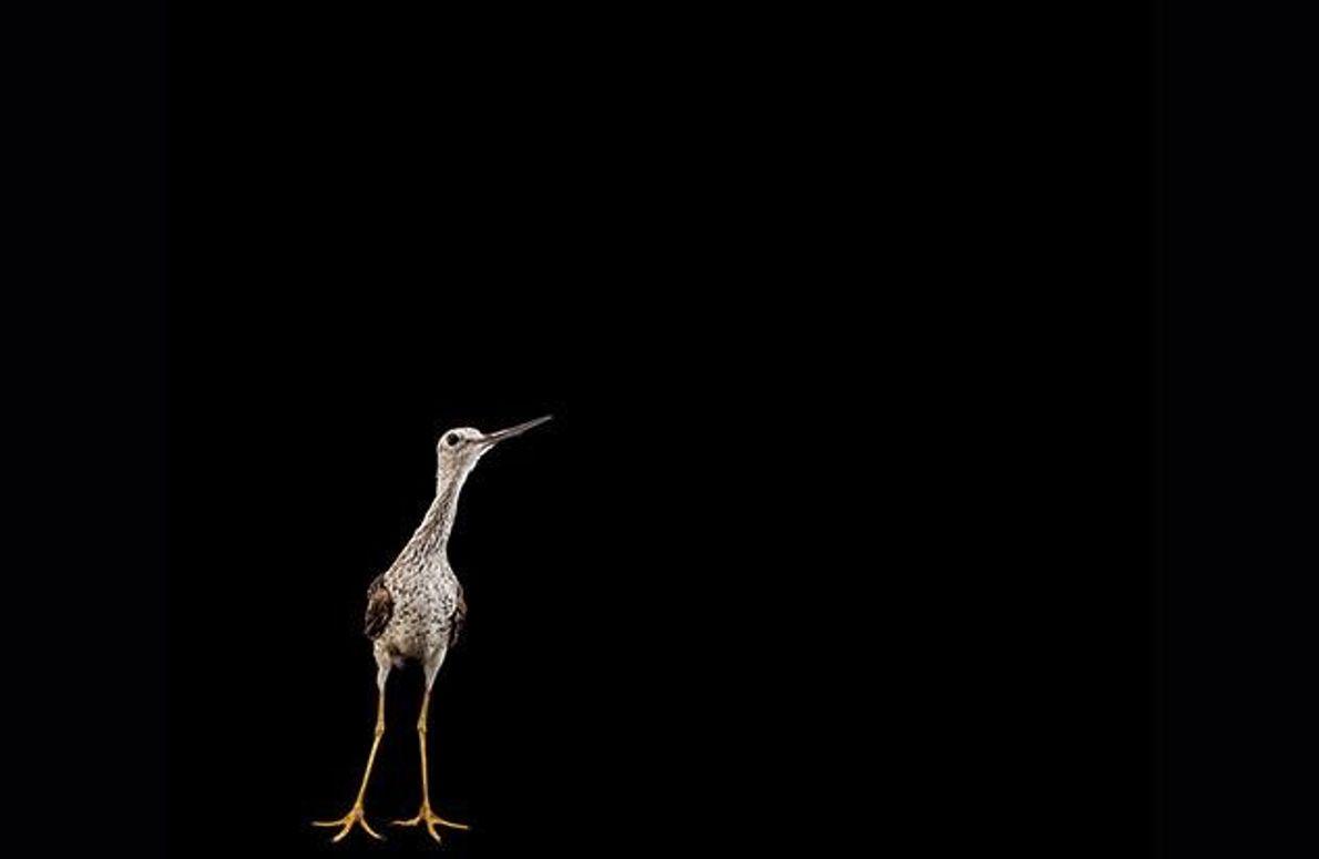 Der anpassungsfähige Schnepfenvogel kommt mit dem Klimawandel bisher gut zurecht. Vor allem im südlichen Binnenland der …
