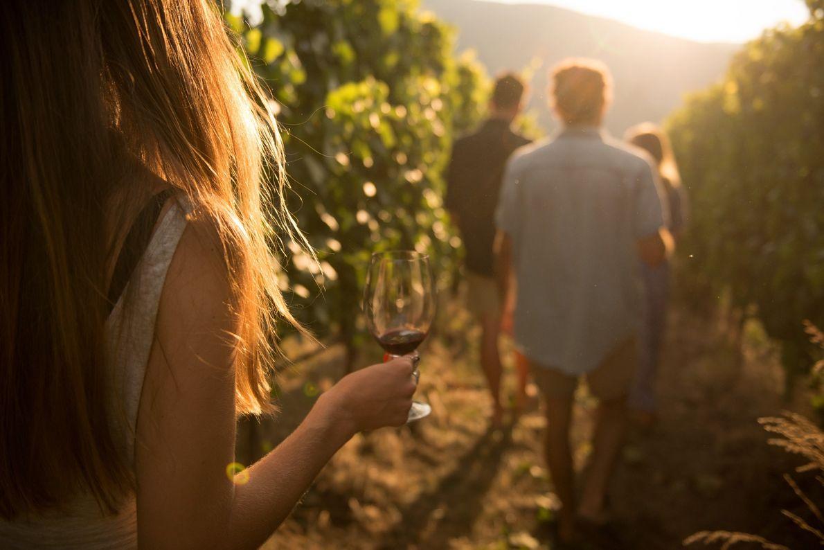 Besucher in einem Weinberg des Painted Rock Estate Winery Ltd.