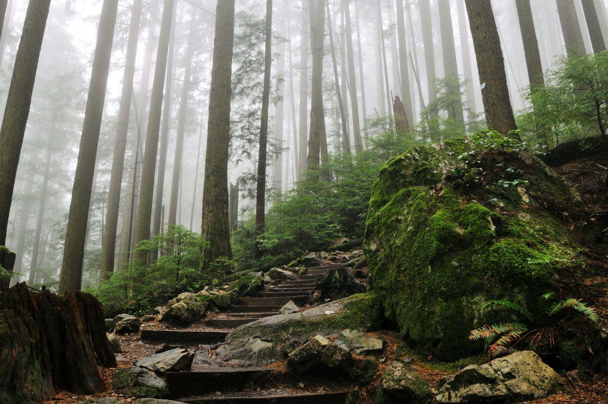 Der Grouse Grind Trail wirkt eher wie eine steile Treppe und nicht wie ein Wanderweg. Der ...