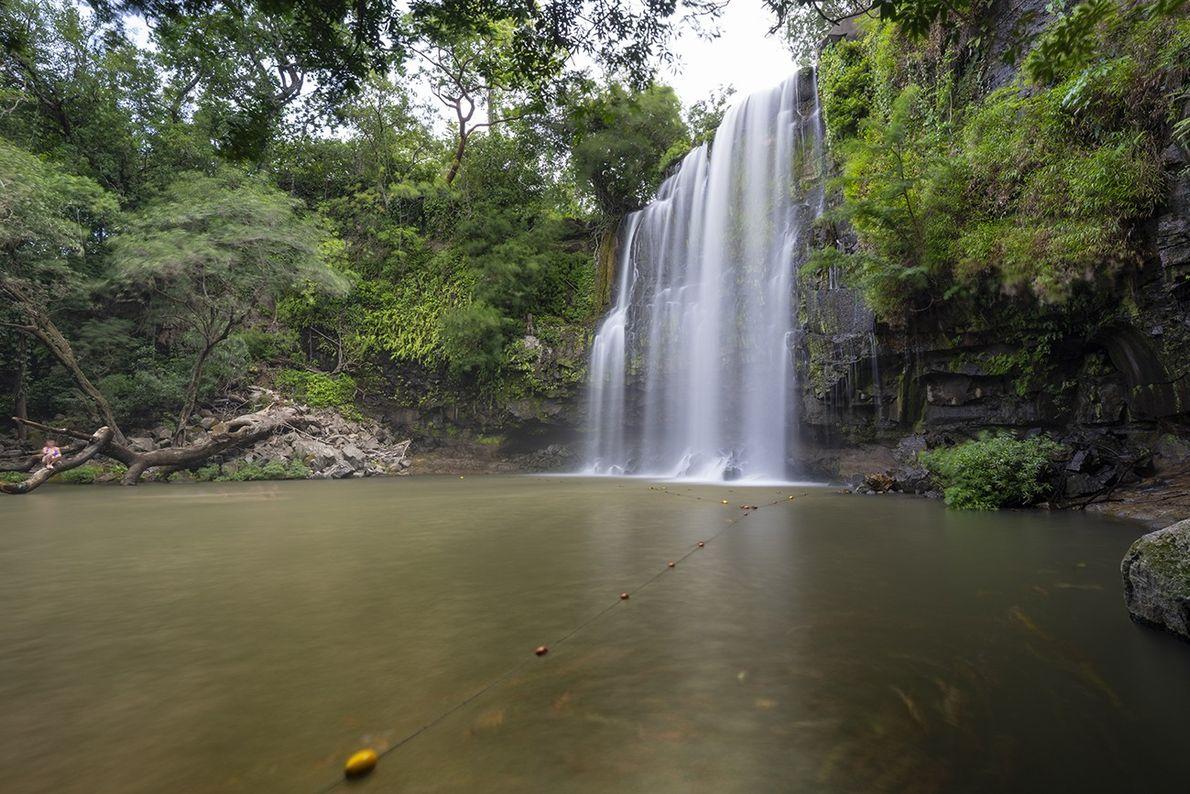 Dschungel Costa Ricas