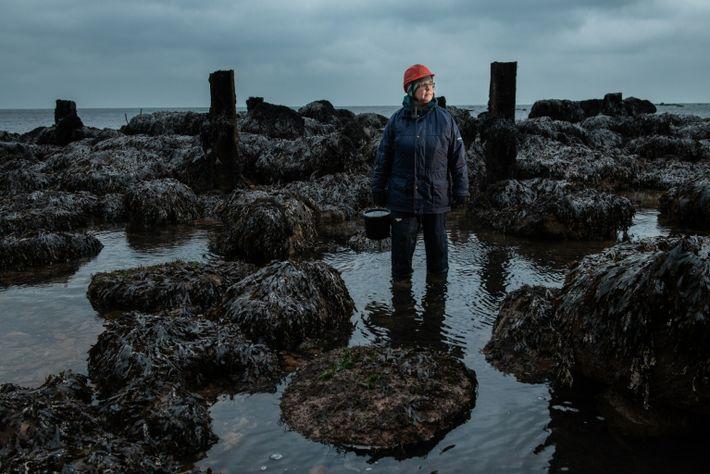 Eva-Maria Brodte, Wissenschaftlerin am Alfred-Wegener-Institut, sammelt an der Küste Helgolands Stern-Seescheiden.