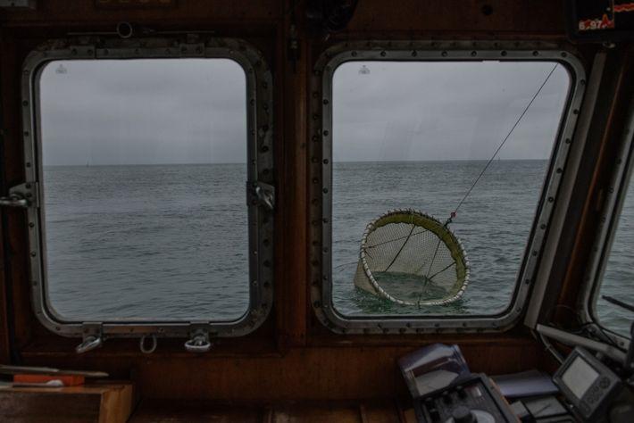 Die Aade zieht ein trichterförmiges Netz hinter sich her. Das Forschungsboot ist im Auftrag der Biologischen ...