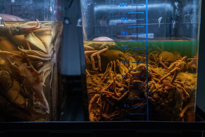 Das BAH lässt die Aade auch Tintenfische und Krebstiere von ihren Fahrten mitbringen. Diese werden von ...