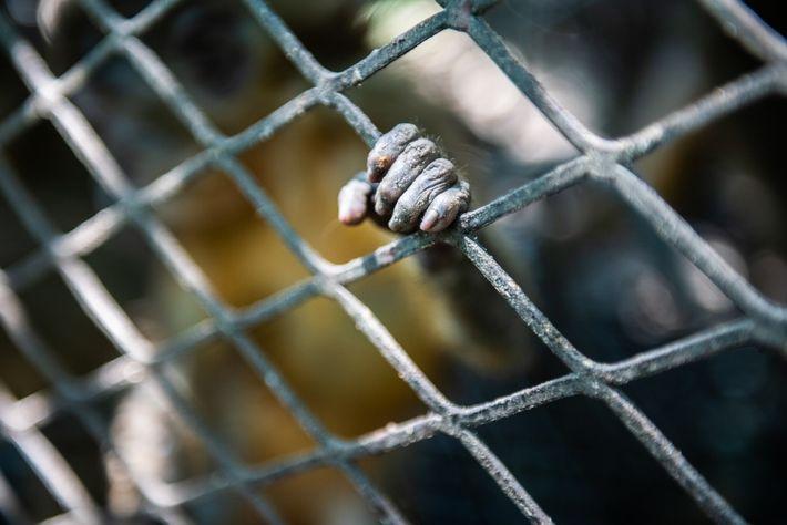 Affenhand an Käfig
