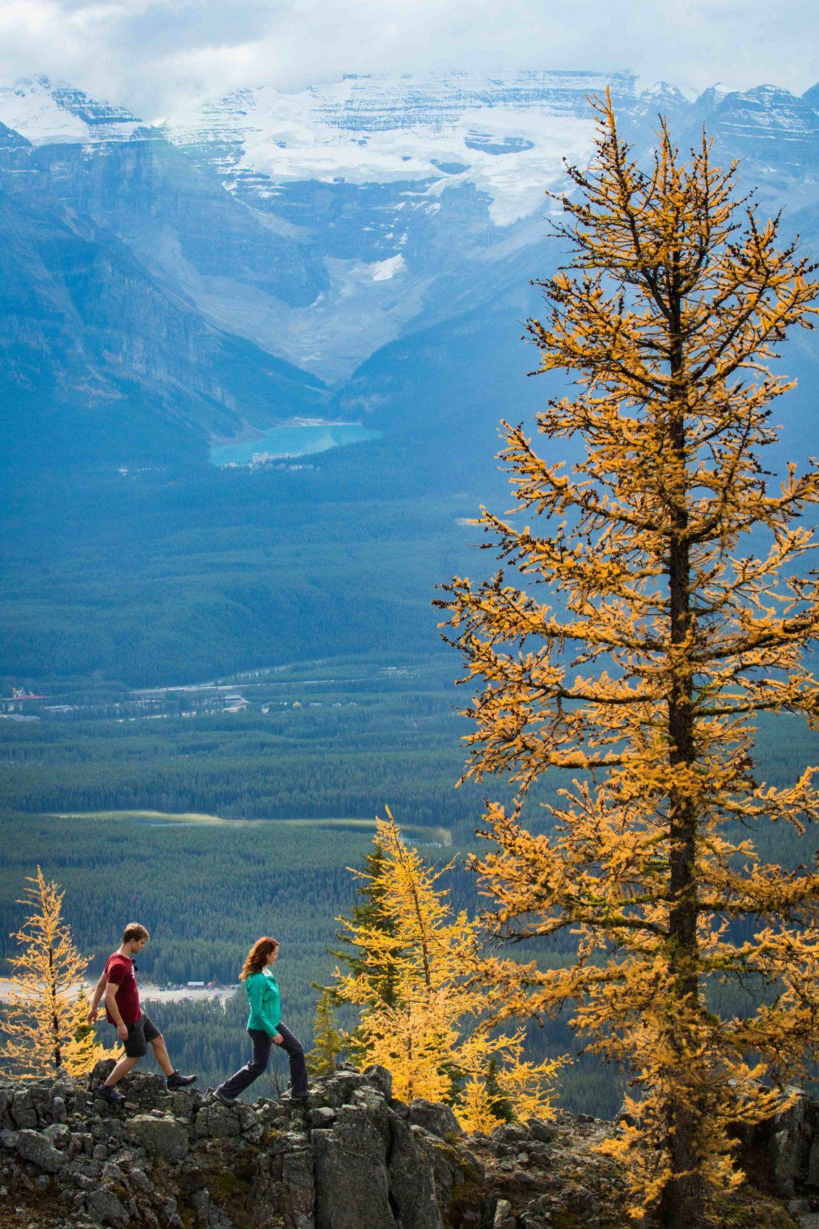 Rund um den Lake Louise gibt es Wanderwege in allen Schwierigkeitsgraden, die atemberaubende Aussichten bieten.