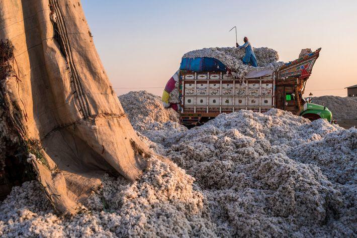 Baumwolllieferung in Pakistan