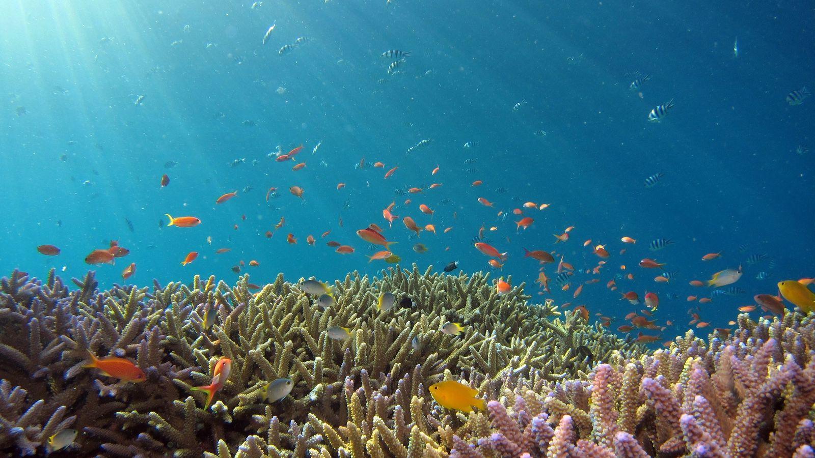 Kindergarten für Korallen