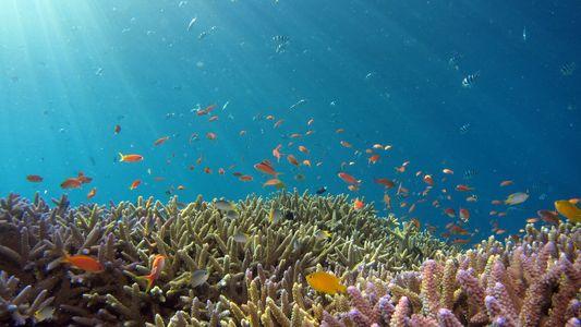 Kindergärten für Korallen: Können sie die Riffe retten?