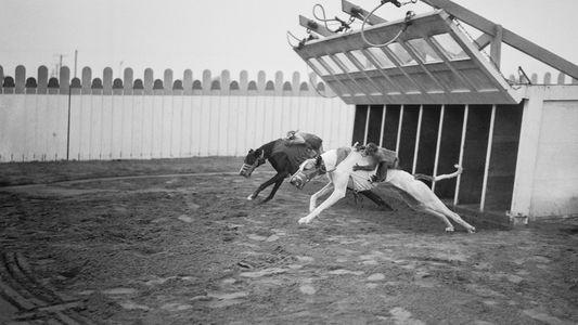 Galerie: Tierwohl gegen Tradition: Das Ende der Windhundrennen in den USA
