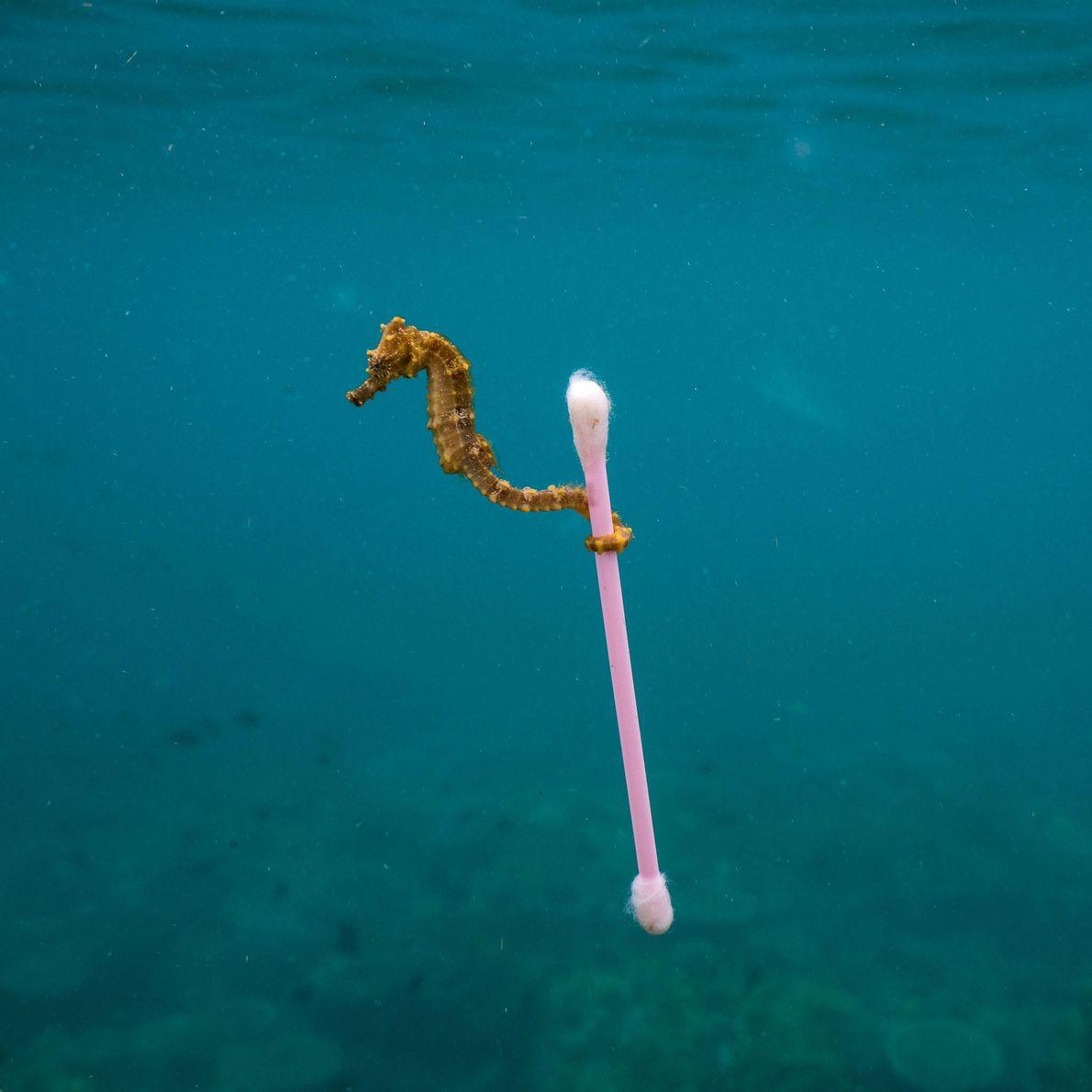 Dieses bedrückende Bild zeigt den Zustand unserer Meere