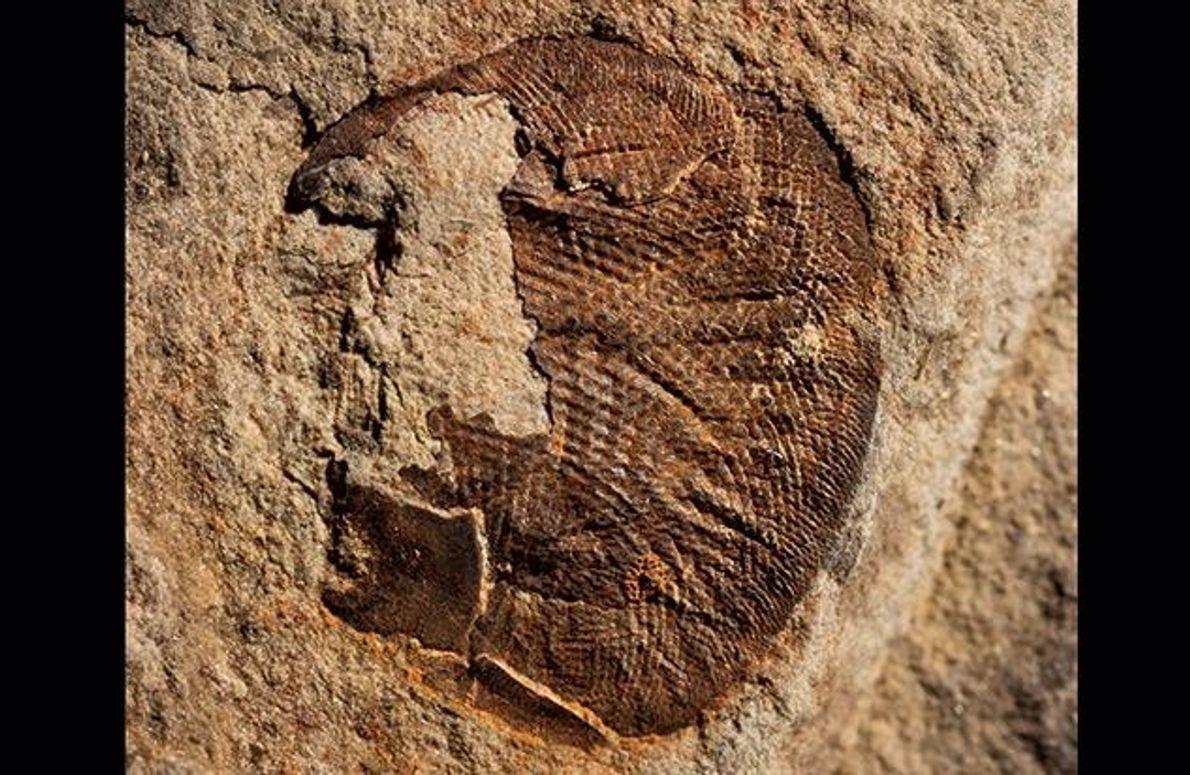 Leistungsfähige Komplexaugen entwickelten sich schon vor mehr als 500 Millionen Jahren. Schon das Auge eines fossilen …