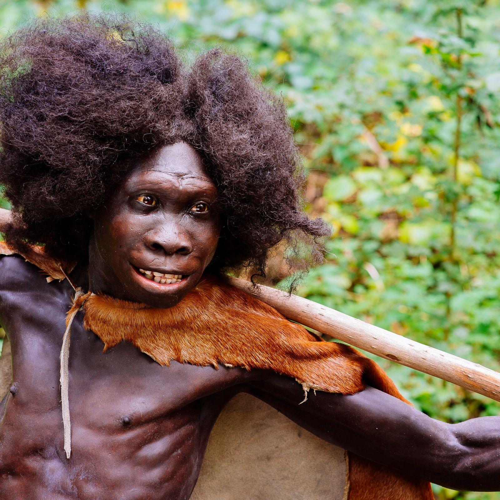Fleischliebhaber: Rekonstruktion des Turkana-Jungen, der vor rund 1,5 Millionen Jahren in Kenia lebte. Das Skelett des ...