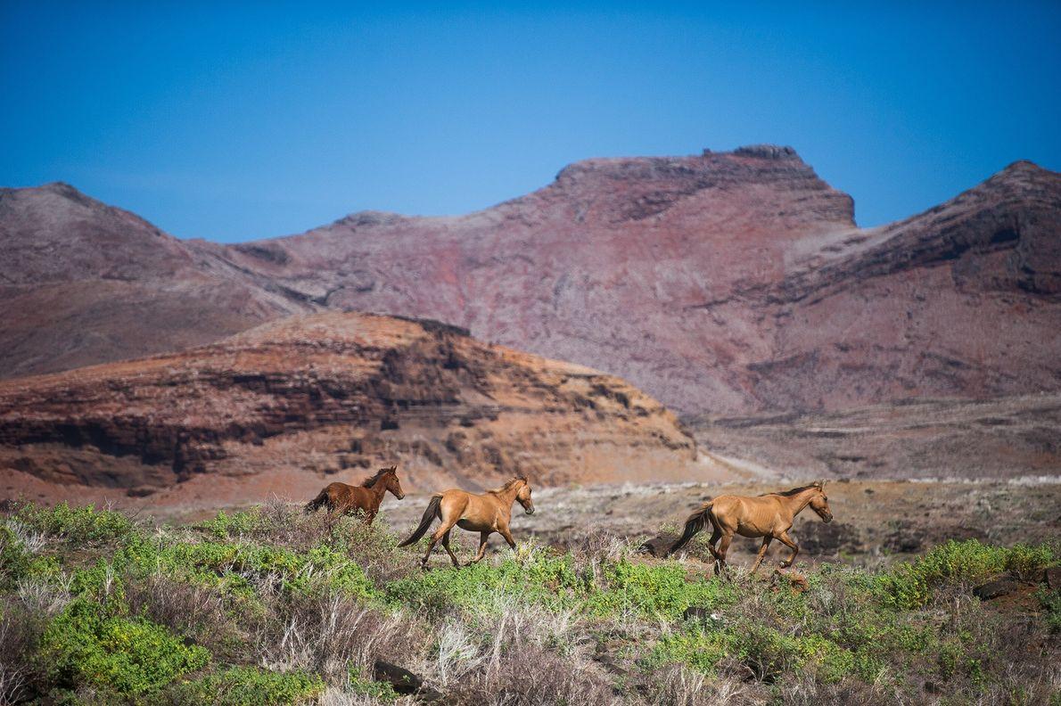 Wildpferde auf den Marquesas