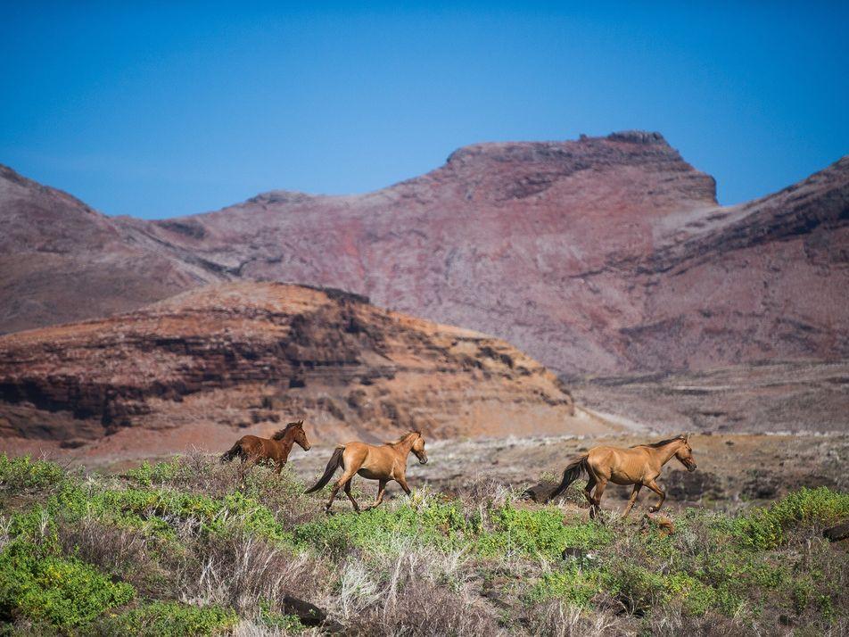 Galerie: Die letzten Reiter der Marquesas