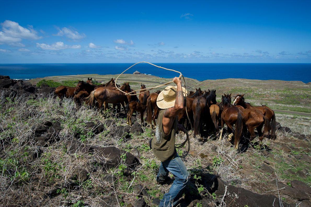 Reiter von Ua Huka