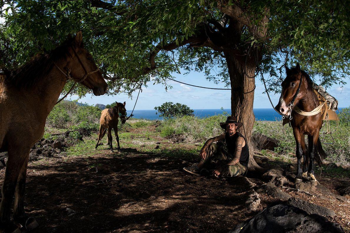 Wildpferde in den Hügeln von Ua Huka