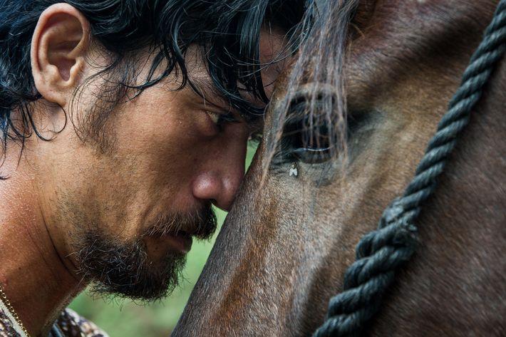 Vertrauen zwischen Pferd und Reiter